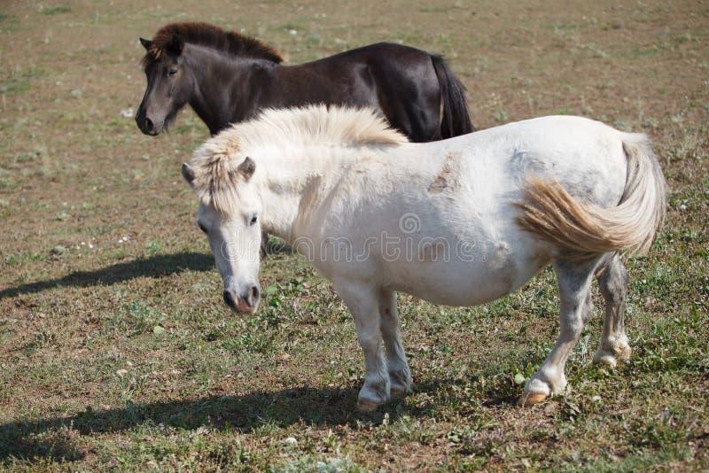 Paarden die bij runch op heldere de zomerdag voeden, close-up stock afbeeldingen