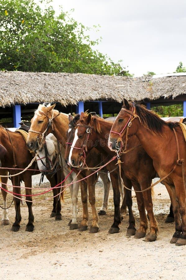 Paarden die bij strand worden verzameld royalty-vrije stock fotografie