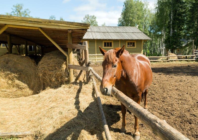 Paarden die camera onderzoeken royalty-vrije stock afbeeldingen