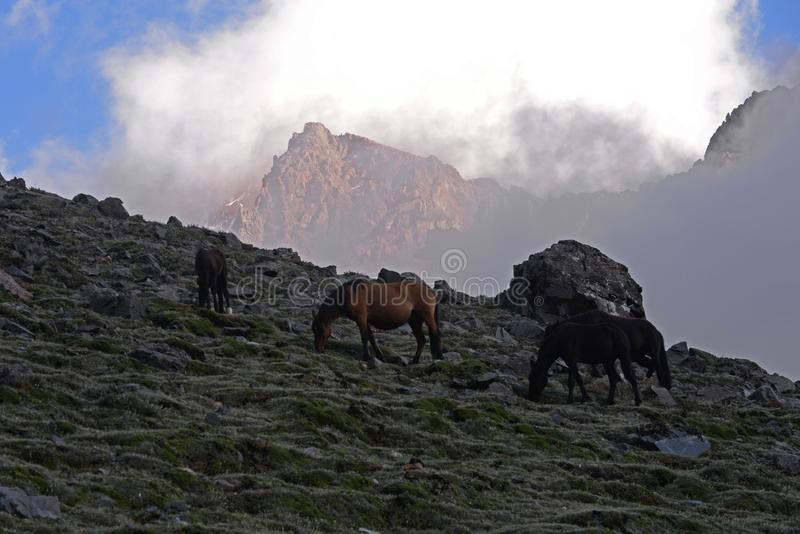 Paarden die in de bergen weiden royalty-vrije stock afbeeldingen