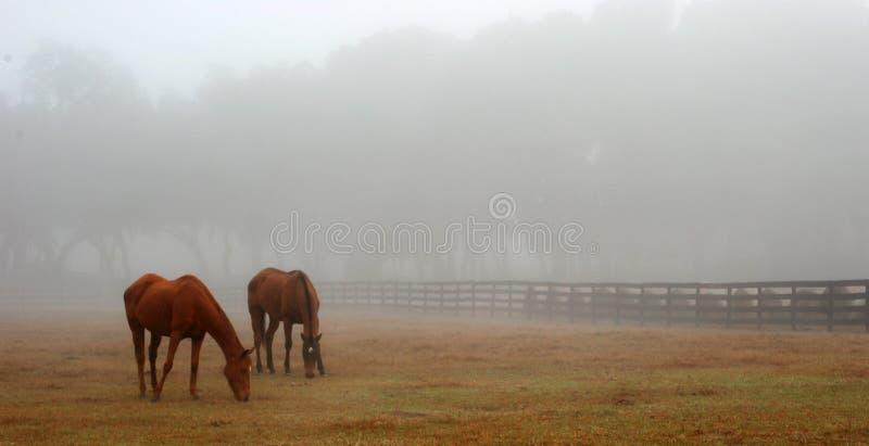 Paarden die in de Mist weiden royalty-vrije stock foto