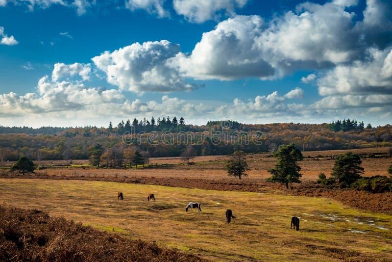 Paarden die in de Zon garzing royalty-vrije stock foto