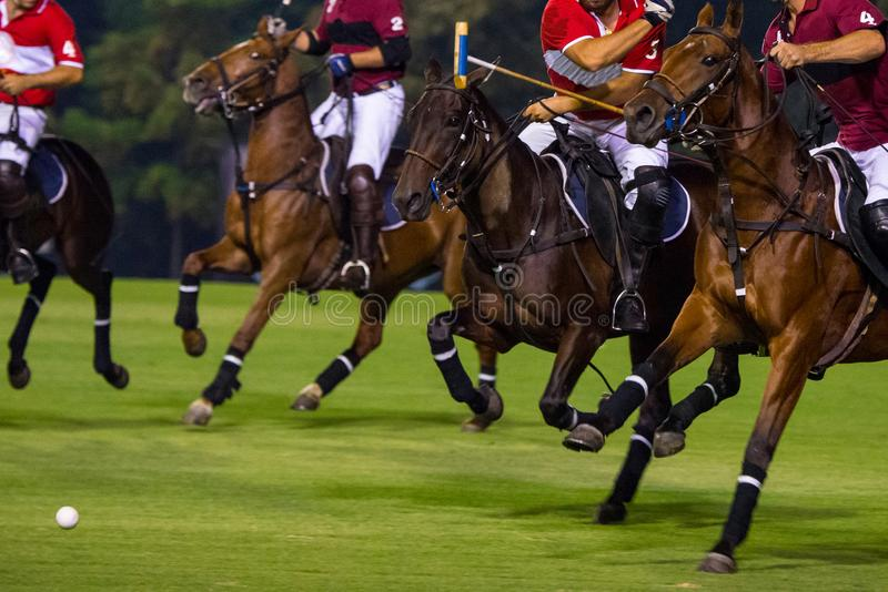 Paarden die in een Nacht Polo Game lopen stock fotografie