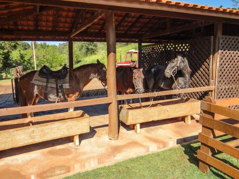 Paarden die en in de stal rusten voeden royalty-vrije stock afbeeldingen