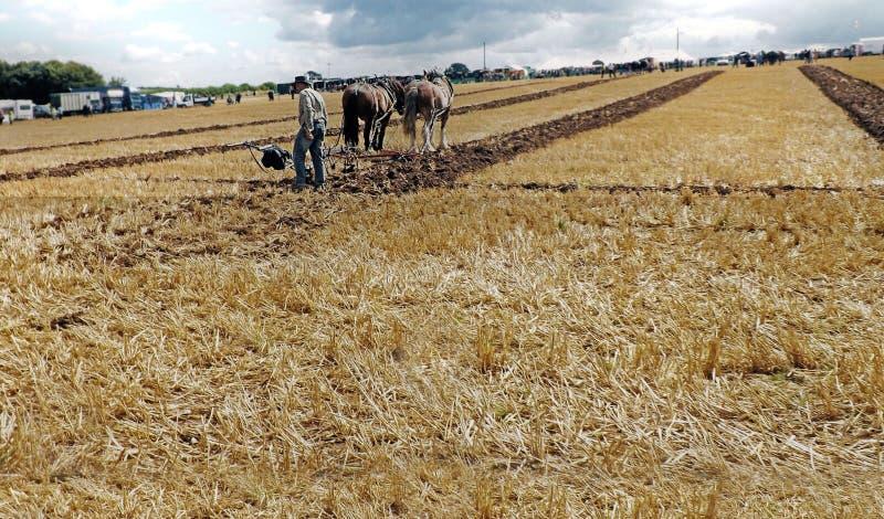 Paarden die groot strogebied in Ierland voor aardappels of graan met voorgrond voor het exemplaar van de redacteurstekst ploegen stock fotografie