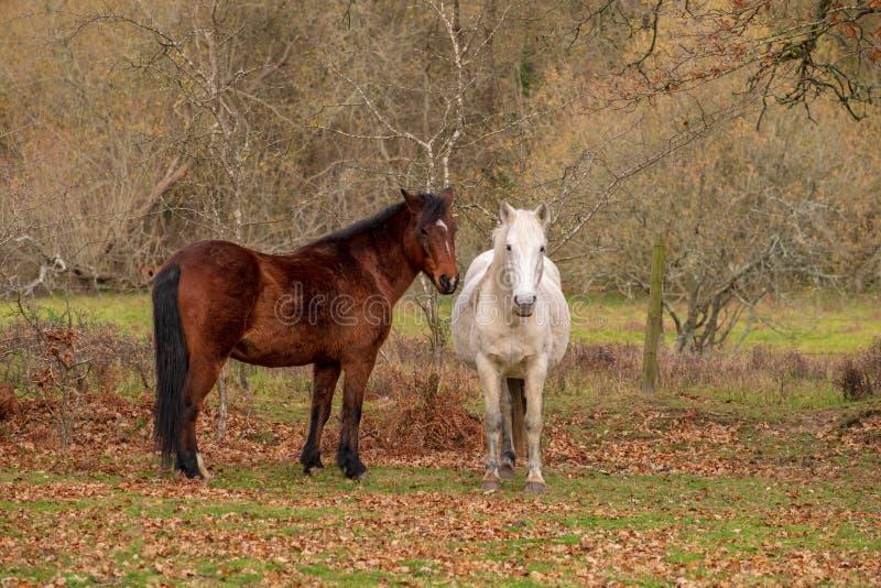 Paarden die op een gebied weiden stock fotografie