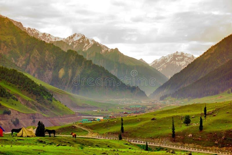 Paarden die op een Heuvel, Kashmir weiden stock afbeelding