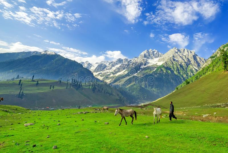 Paarden die op een Heuvel, Kashmir weiden stock afbeeldingen