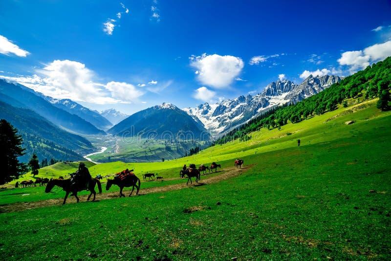 Paarden die op een Heuvel, Kashmir weiden stock fotografie