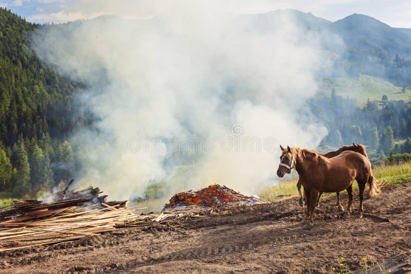 Paarden, die op gras bij hoogland Karpatisch weiland voeden stock afbeeldingen
