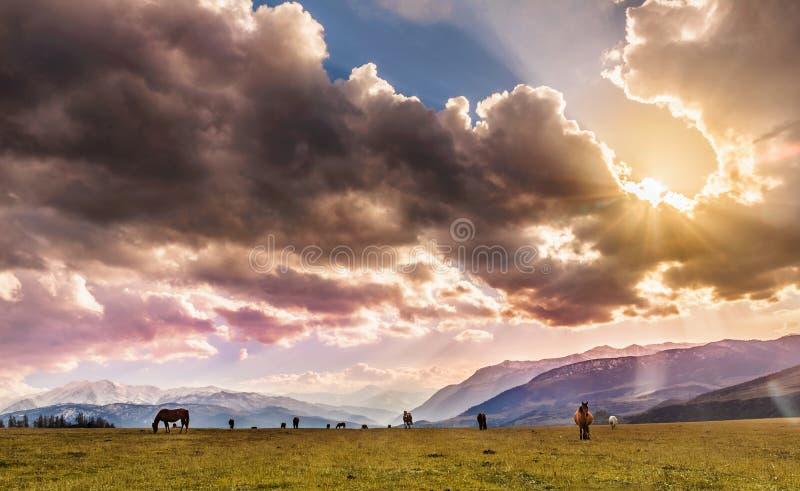 Paarden die op het gebied staren royalty-vrije stock afbeelding