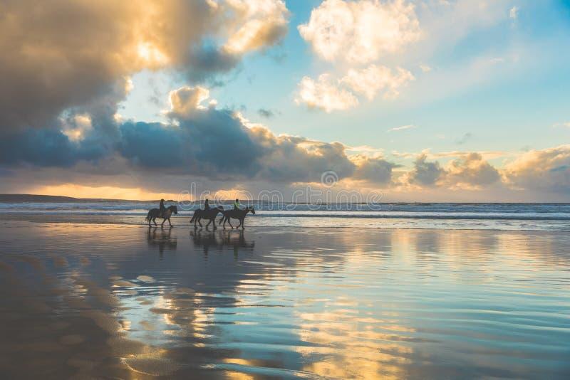Paarden die op het strand bij zonsondergang lopen royalty-vrije stock afbeelding