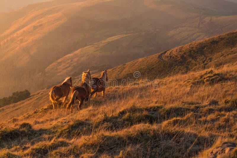 Paarden die over bergketen de afstand tegenkomen royalty-vrije stock foto's