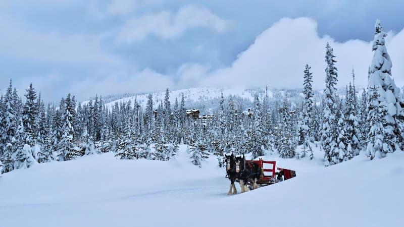 Paarden die rood vervoer in de winterbos trekken royalty-vrije stock fotografie
