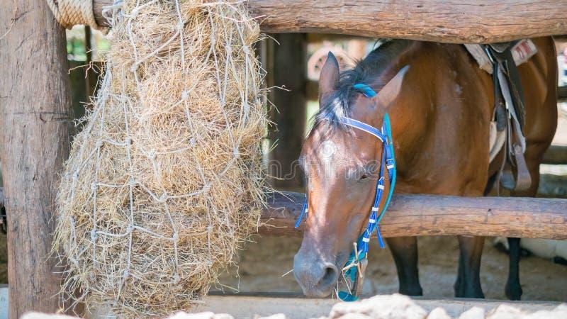 Paarden die vers hooi eten royalty-vrije stock foto's
