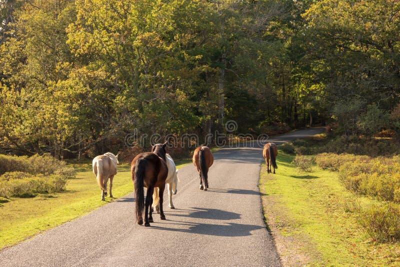 Paarden die in weg lopen royalty-vrije stock foto