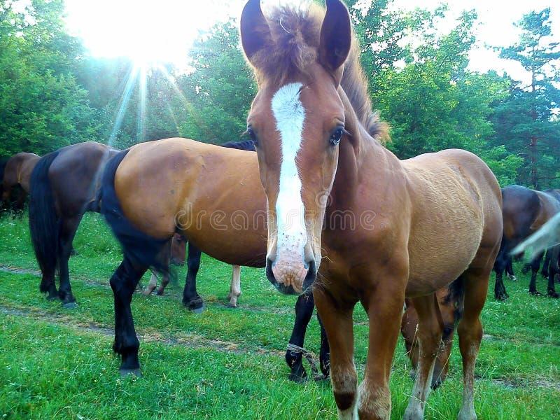 Paarden die 2 weiden royalty-vrije stock afbeeldingen
