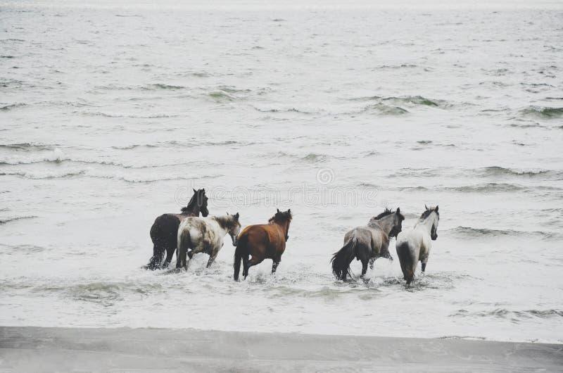 Paarden die wildernis, Ometepe Nicaragua in werking stellen royalty-vrije stock afbeelding