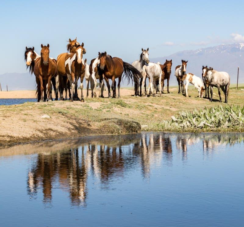 Paarden die zich boven vijver bevinden royalty-vrije stock fotografie