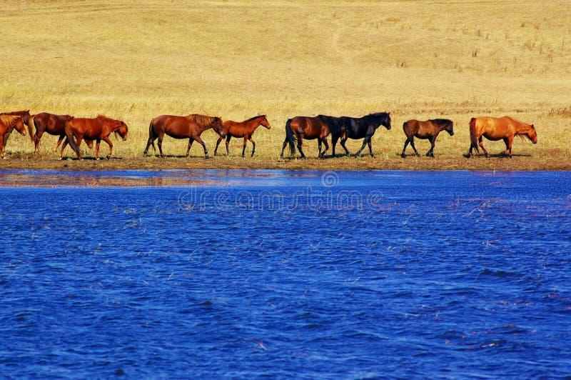 Paarden door het meer royalty-vrije stock afbeeldingen