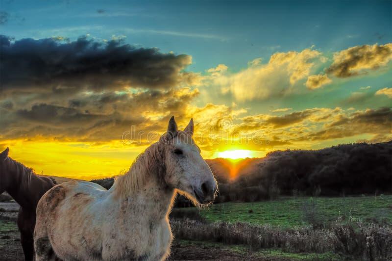 Paarden in een landbouwbedrijf bij zonsondergang royalty-vrije stock fotografie