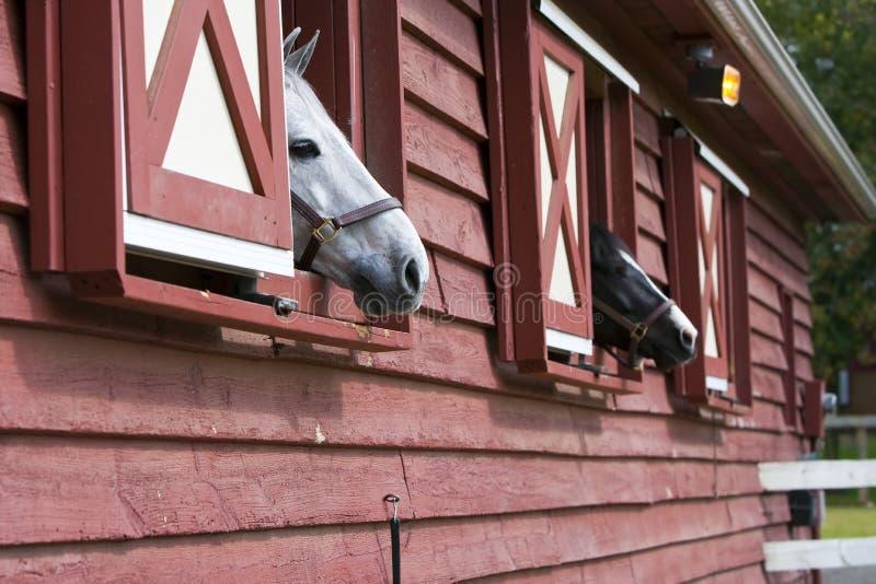 Paarden in een Schuur stock afbeeldingen