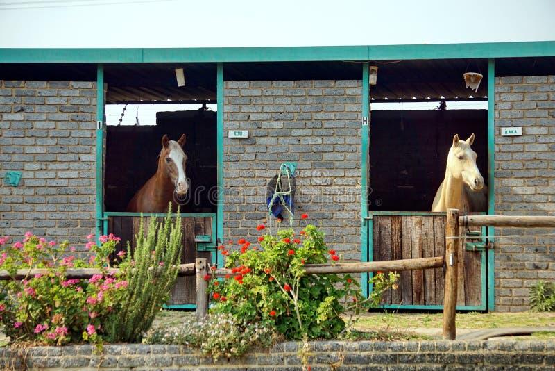 Paarden in een stal in Johannesburg royalty-vrije stock afbeeldingen