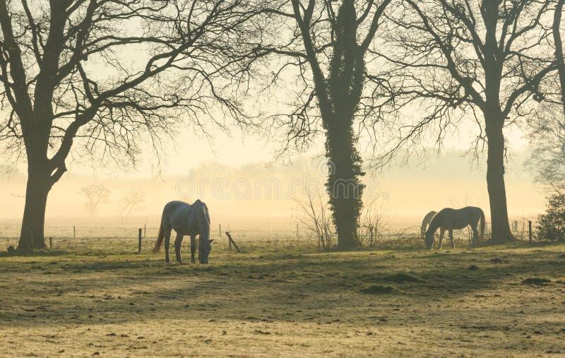 Paarden in een weide royalty-vrije stock fotografie