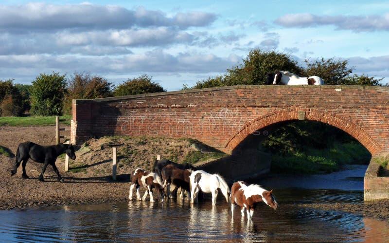 Paarden en brug royalty-vrije stock afbeeldingen