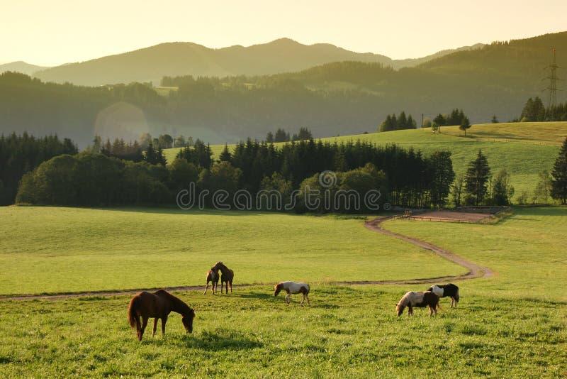 Paarden en idyllische ochtend stock foto