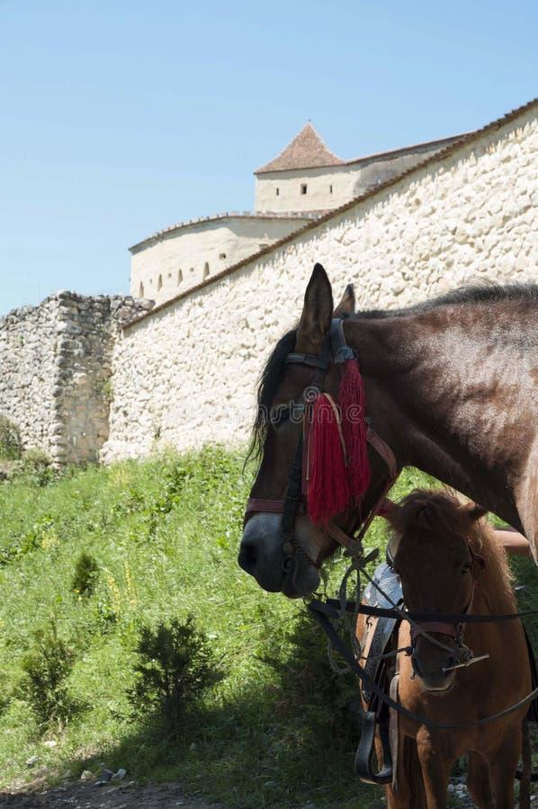 Paarden en Middeleeuwse architectuur stock foto