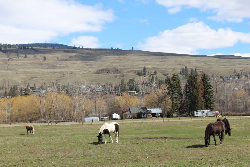 Paarden en poney op landbouwbedrijfgebied royalty-vrije stock afbeelding