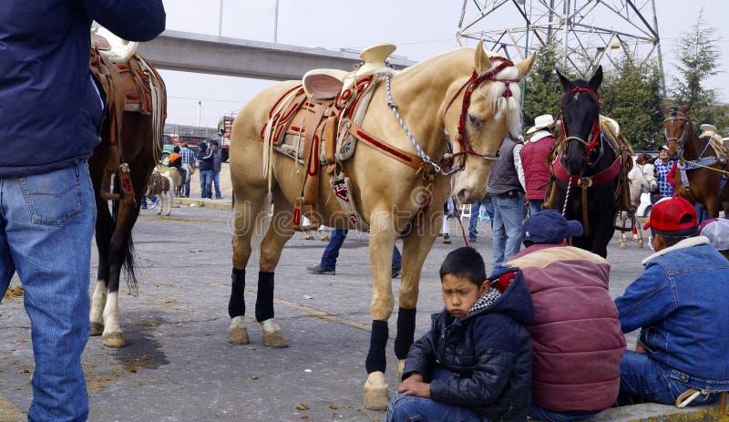 Paarden en ruiters stock afbeeldingen