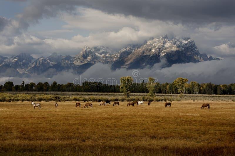 Paarden en Tetons royalty-vrije stock afbeelding