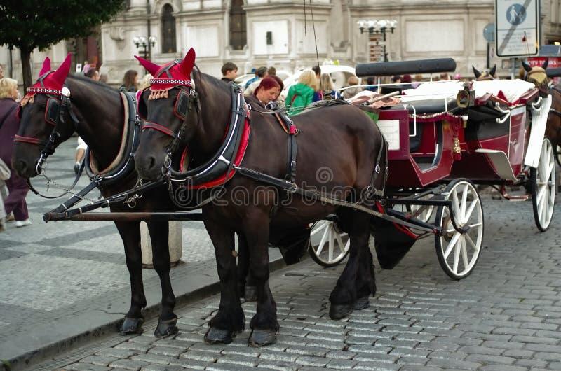 Paarden en vervoer in Praag royalty-vrije stock fotografie