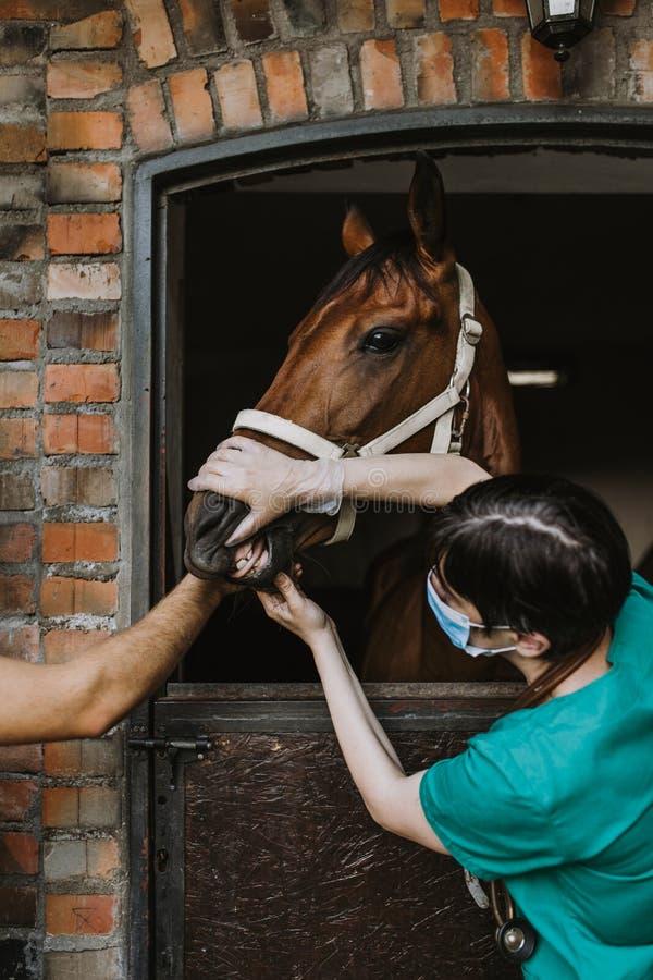 Paarden en veterinaire baan stock foto