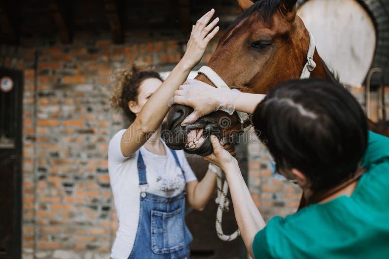Paarden en veterinaire baan stock afbeelding