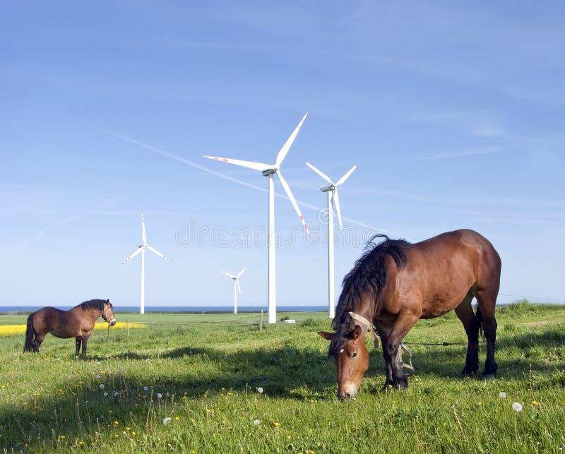 Paarden en windturbines royalty-vrije stock afbeeldingen