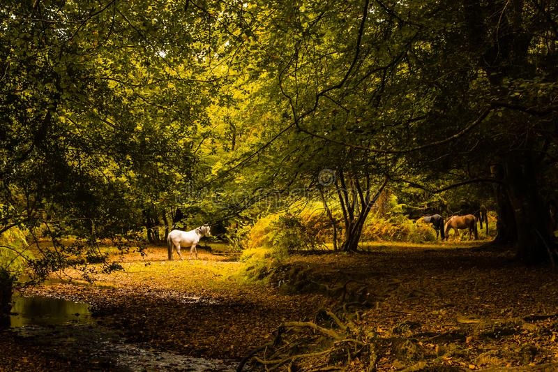 Paarden in Forest Clearing stock fotografie