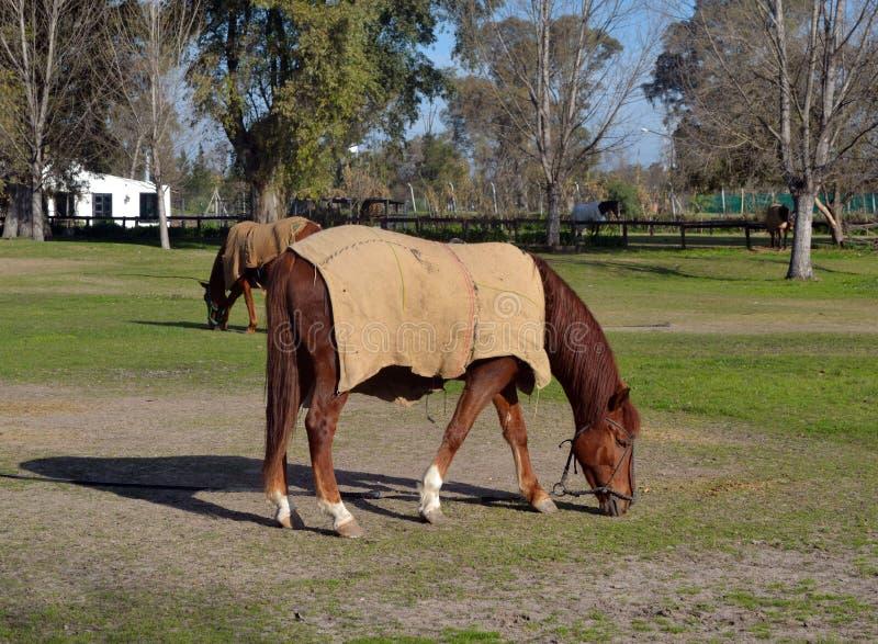 Paarden in het landbouwbedrijf stock afbeeldingen