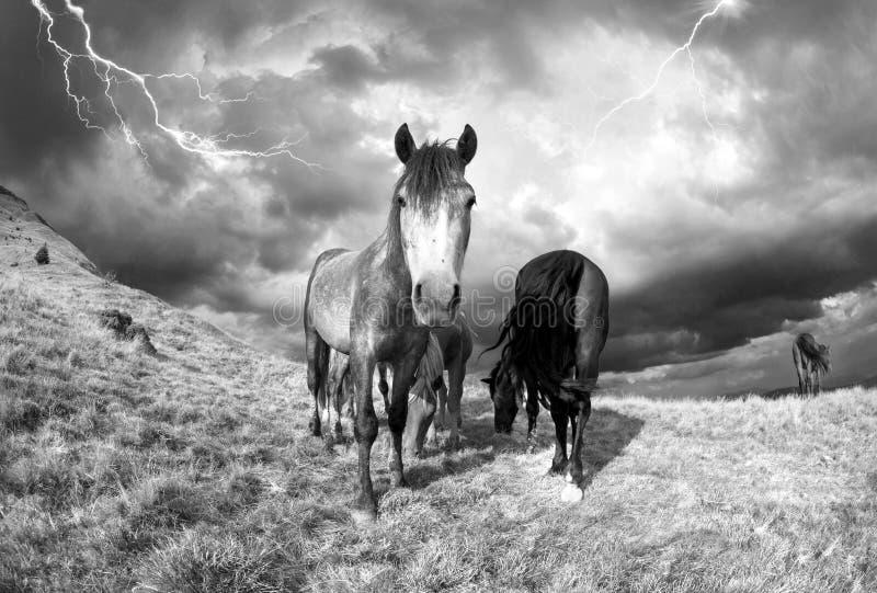Paarden in het onweer stock afbeeldingen