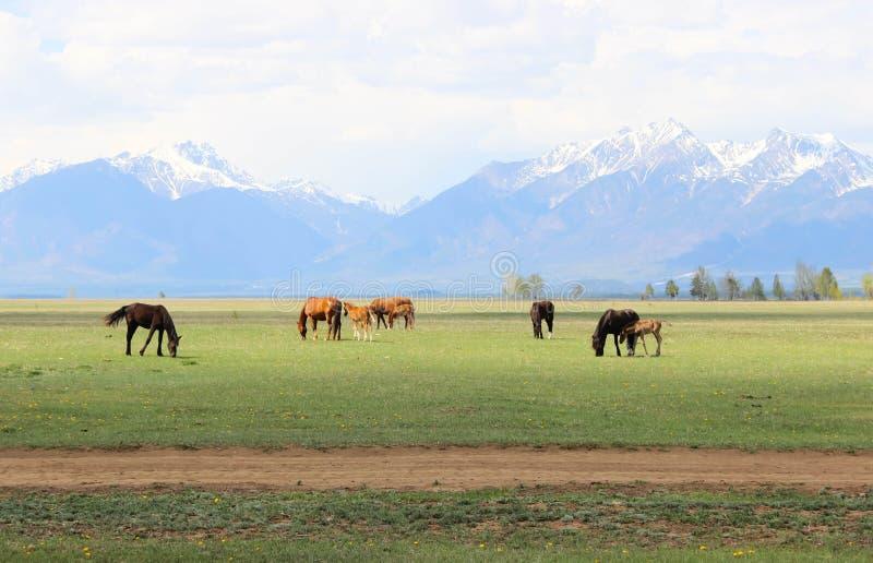 Paarden in het weiland royalty-vrije stock foto's