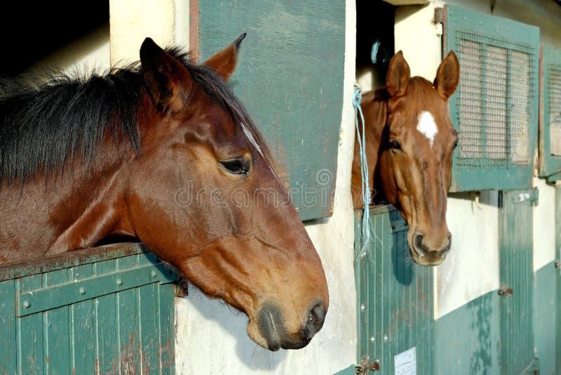Paarden in hun stal royalty-vrije stock afbeelding