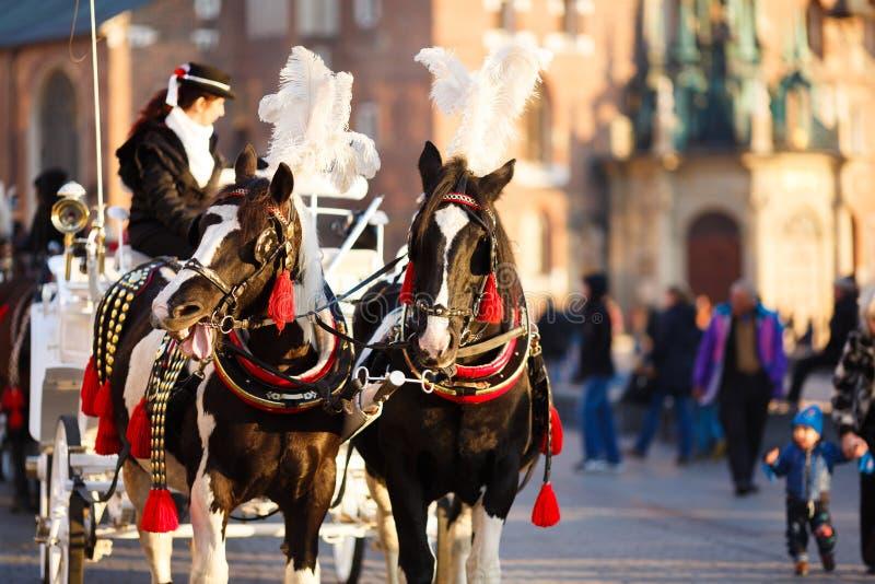 Paarden in Krakau royalty-vrije stock afbeeldingen