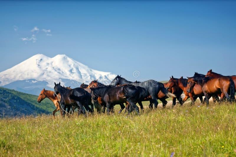 Paarden, kudde, bergen royalty-vrije stock foto's
