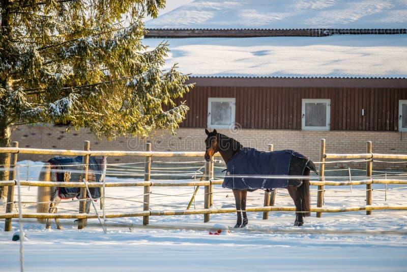 Paarden met kleren, koude dag royalty-vrije stock afbeelding