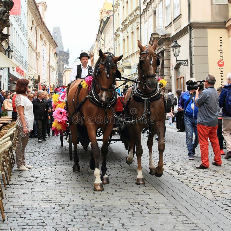 Paarden met vervoer op Khamore - het festival van wereldrome royalty-vrije stock foto