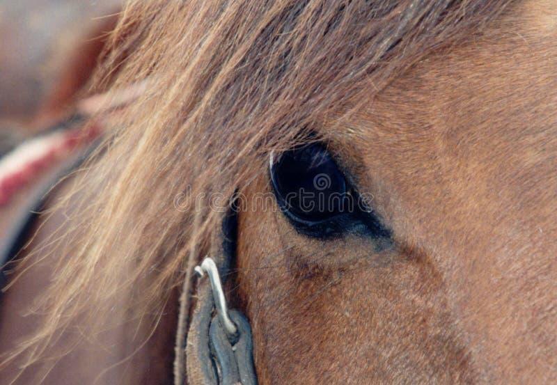 Paarden Oog royalty-vrije stock afbeelding