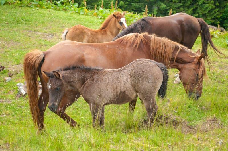 Paarden op aard De paarden weiden Mooie aard royalty-vrije stock foto