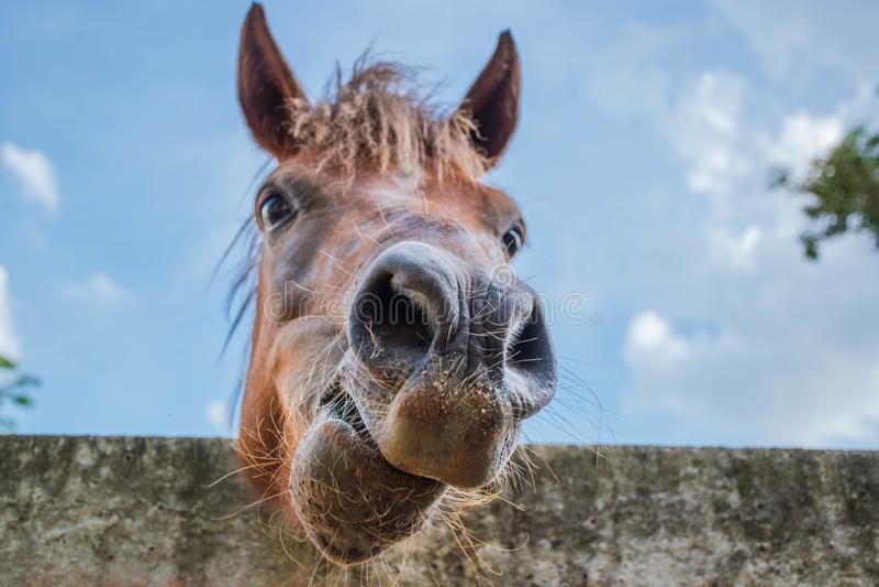 Paarden op een heldere nadruk van het daggezicht van close-uppaarden stock afbeeldingen